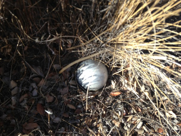 Mystery ball. This was about the size of a tennis ball, and of a silvery, plastic material. It felt hollow and had two dime sized dents in the buried portion. A half sphere, of perhaps aluminum, was found about 50 yards away.