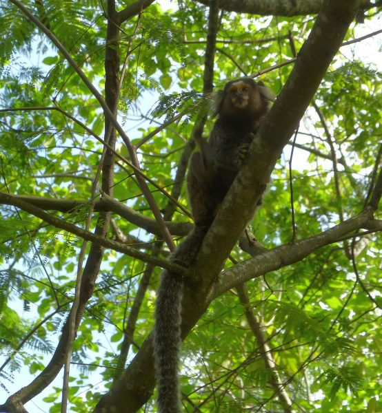 Yep. Monkey pic.....Proves it!! Don't know what it was, but it was tiny, about like a small squirrel.